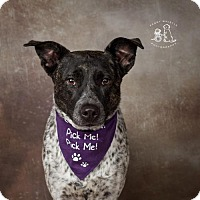 Adopt A Pet :: Ashi - Dallas, TX