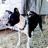 Adopt A Pet :: KELLAN - Mission Viejo, CA