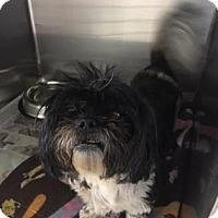 Adopt A Pet :: Candy 2 - Miami, FL