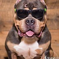 Adopt A Pet :: Bruce - Blaine, MN