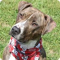 Adopt A Pet :: RAJAH - Clayton, NJ