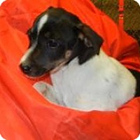 Adopt A Pet :: Zydeco ADOPTED!! - Antioch, IL