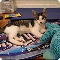 Adopt A Pet :: Bishop - Los Angeles, CA