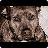 Adopt A Pet :: Annie - Bloomingdale, GA