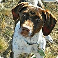 Adopt A Pet :: Carl - Cheyenne, WY
