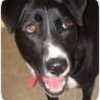 Adopt A Pet :: Duke *Courtesy/Urgent - Xenia, OH