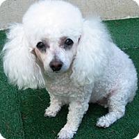 Adopt A Pet :: Rosie - Dover, MA
