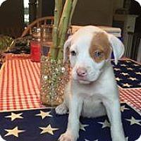 Adopt A Pet :: Fiona - Marlton, NJ