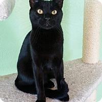Adopt A Pet :: Gabriel - Edmond, OK