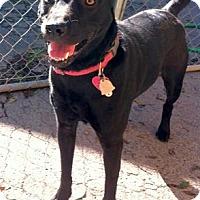 Adopt A Pet :: Asha - Concord, NC