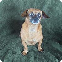Adopt A Pet :: Minnie - Temecula, CA