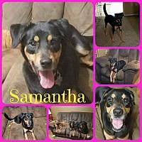 Adopt A Pet :: Samantha - Ft Worth, TX