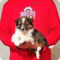 Adopt A Pet :: Phoenix - South Euclid, OH
