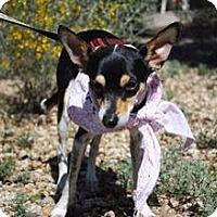 Adopt A Pet :: Alvin (Courtesy Listing) - Scottsdale, AZ