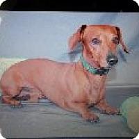 Adopt A Pet :: Petey - Atascadero, CA
