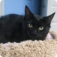 Adopt A Pet :: Raven - Anchorage, AK