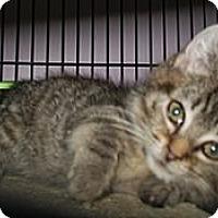 Adopt A Pet :: Tootsie - Shelton, WA
