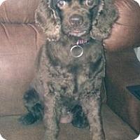 Adopt A Pet :: Jewel - Madison, WI