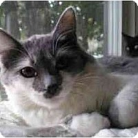 Adopt A Pet :: Olive - Portland, OR