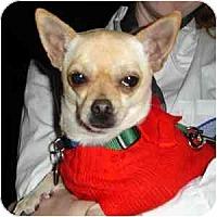Adopt A Pet :: Nicolas - Phoenix, AZ