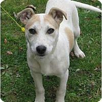 Adopt A Pet :: Cruiser - Allentown, PA