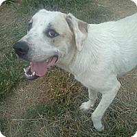 Adopt A Pet :: Tater - Milford, CT