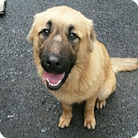 Adopt A Pet :: Randy - Pottsville, PA