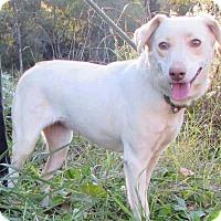 Adopt A Pet :: Amy - Bardonia, NY