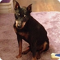 Adopt A Pet :: SUGAR DADDY - Higley, AZ