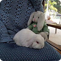 Adopt A Pet :: Cooper - Williston, FL