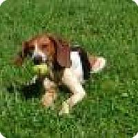Adopt A Pet :: Molly - Bakersville, NC