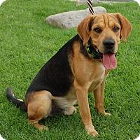 Adopt A Pet :: Laredo - West Los Angeles, CA