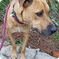 Adopt A Pet :: Sandy - Southbury, CT