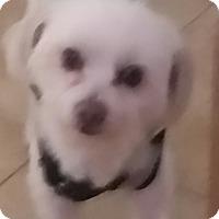 Adopt A Pet :: boots - temecula, CA