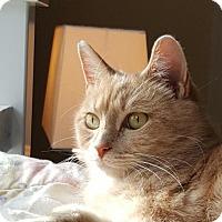 Adopt A Pet :: Becca - Winston-Salem, NC