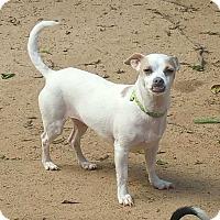 Adopt A Pet :: Angel C - Irmo, SC