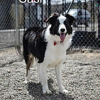Adopt A Pet :: Cash - Yreka, CA