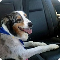 Adopt A Pet :: Tuck - PENDING - Savannah, GA