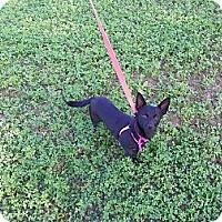 Adopt A Pet :: MINA - Hesperus, CO