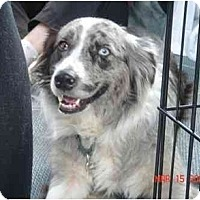 Adopt A Pet :: Sydney - Orlando, FL