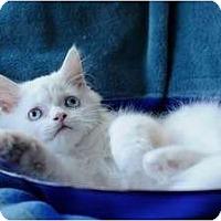 Adopt A Pet :: Baby Giorgio - Columbus, OH