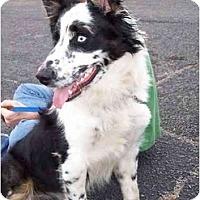 Adopt A Pet :: Diesel - Honaker, VA