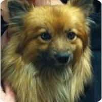 Adopt A Pet :: BEANS - Minnetonka, MN