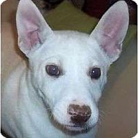 Adopt A Pet :: Winkie - Plainfield, CT