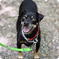 Adopt A Pet :: Cookie - Tinton Falls, NJ