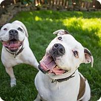 Adopt A Pet :: Roxy & Mingus - Portland, OR