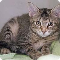 Adopt A Pet :: Leo - Merrifield, VA