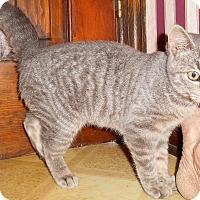 Adopt A Pet :: Breanne - Chattanooga, TN