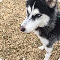 Adopt A Pet :: Kato - Crystal Lake, IL