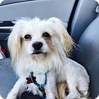 Adopt A Pet :: Porcupine - Encino, CA